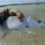 Long Island Bonefish