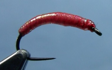 Chewee Bloodworm