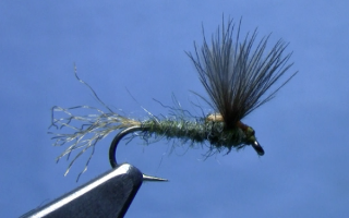 CDC split wing sparkle dun