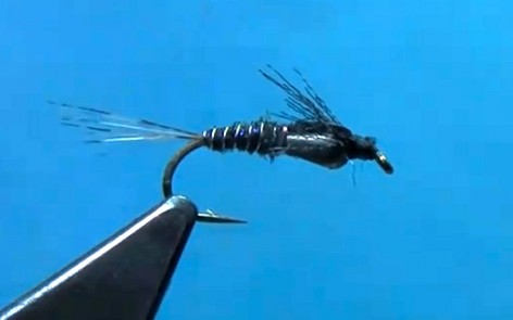 Tungsten Undertaker Nymph for French, Spanish, or Czech nymphing.