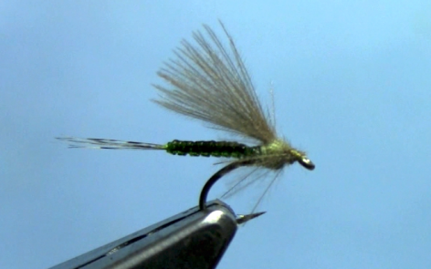 cdc extended body mayfly