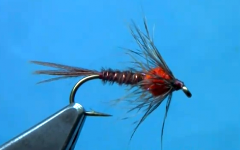 soft hackle pheasant tail nymph