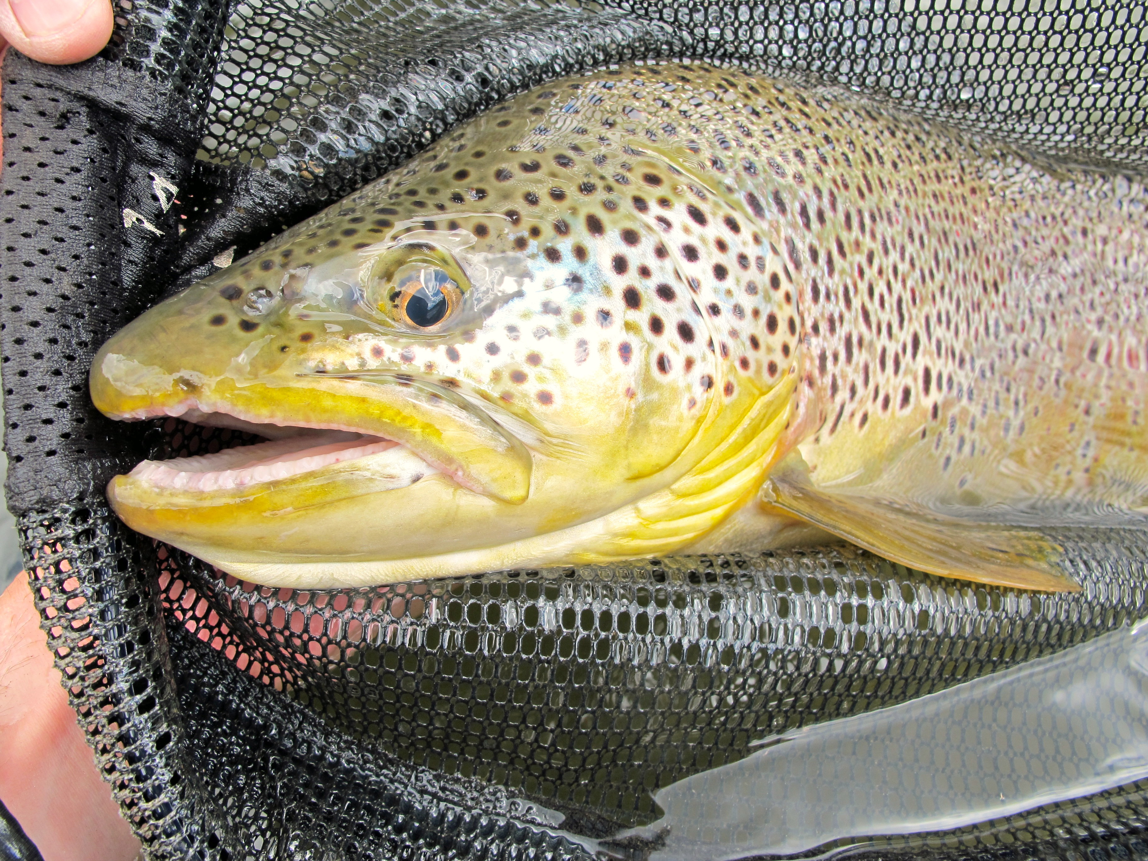 Black hills fishing report 6 8 12 dakota angler for Fly fishing south dakota