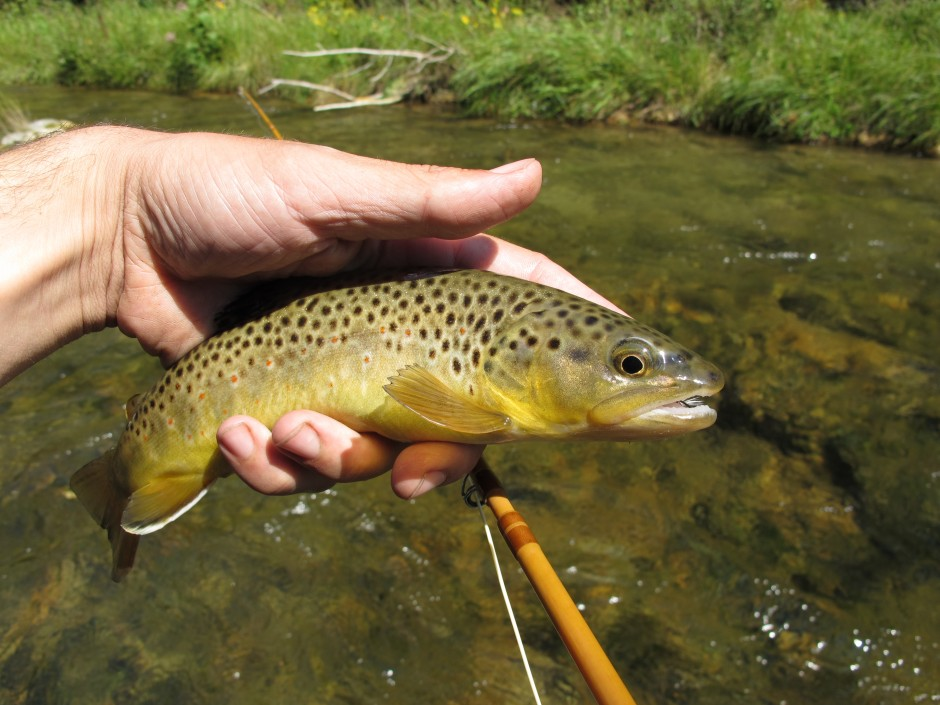 Black hills fishing report 8 29 12 dakota angler for Fly fishing south dakota