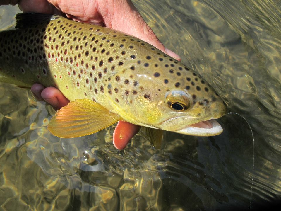 Black hills fishing report 9 1 12 dakota angler for Fly fishing south dakota