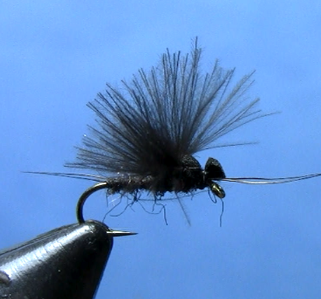 little black stonefly