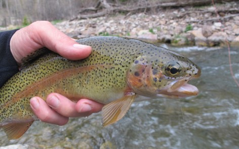 Black Hills Fishing Report 5/22/13