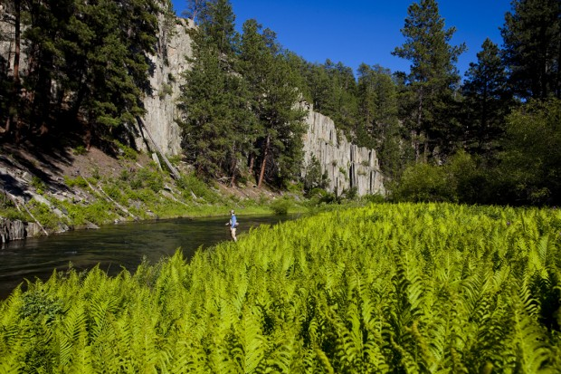 Black hills fishing report dakota angler outfitter for Fly fishing south dakota