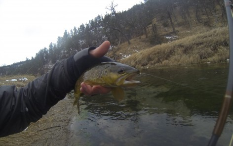 Sand creek brown trout for Dakota angler fishing reports