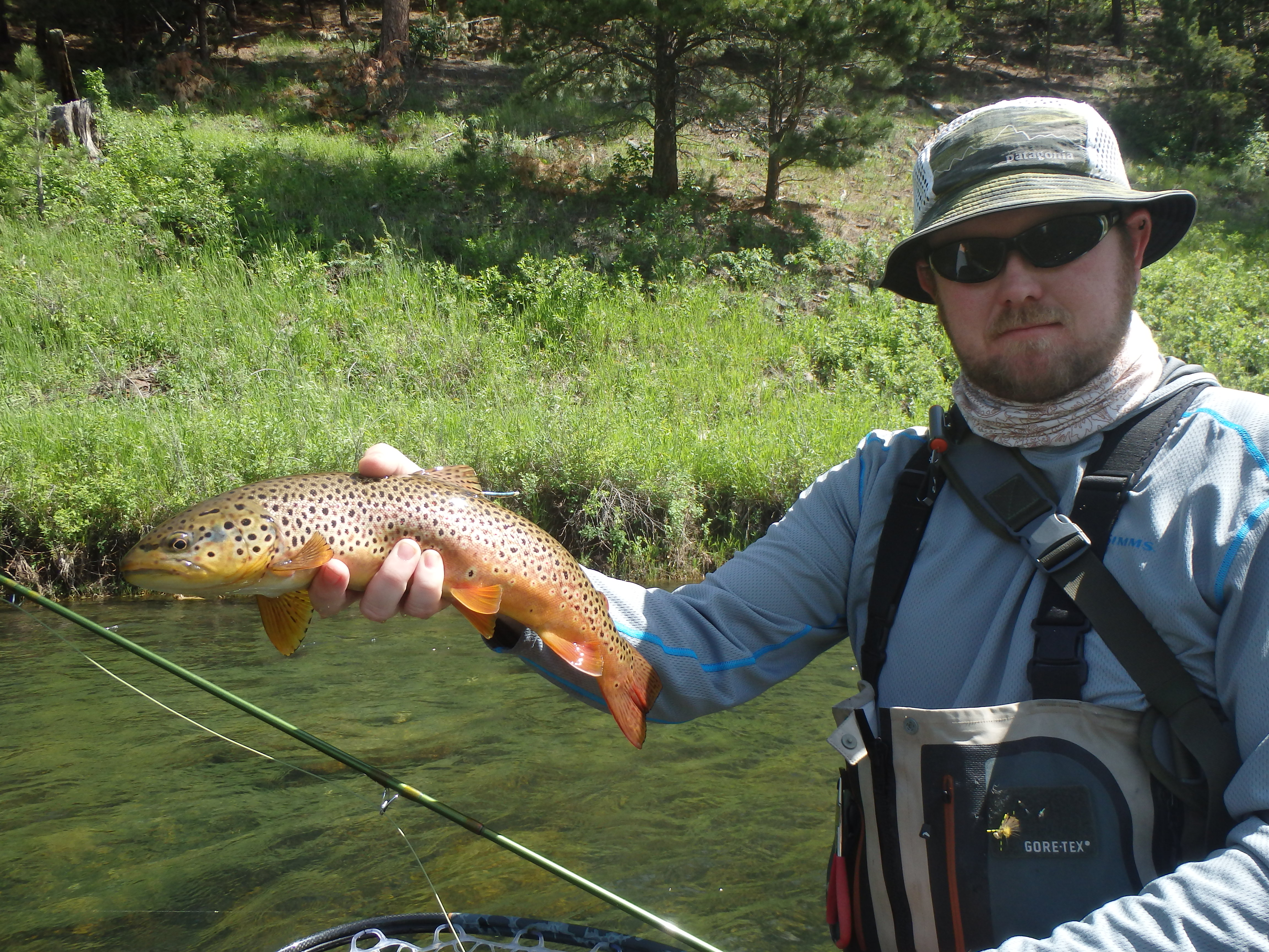 Black hills gold rapid creek brown trout fly fishing for Black hills fly fishing
