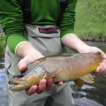 black hills fishing report - brown trout - guided fishing