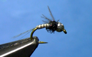 Quill Body Nymph Fly Tying Video