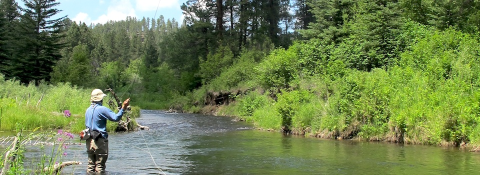 black hills fly fishing guided trips fishing reports