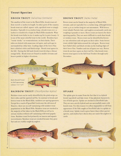 black_hills_fishing_guide_trout_species