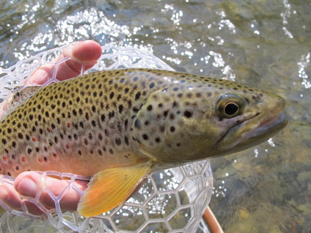 Pretty Rapid Creek Brown!