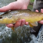 Black hills tenkara fishing july 2014