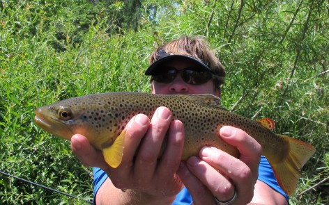 brown trout black hills fly fishing summer 2014