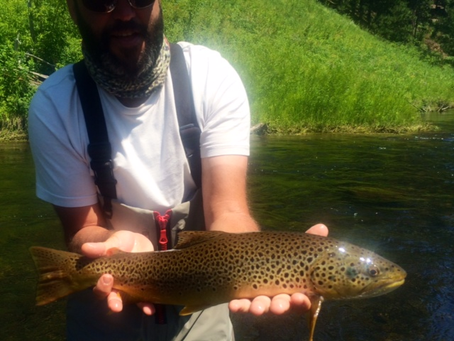 Nice Basin Brown Trout