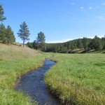 black hills small stream flyfishing trout