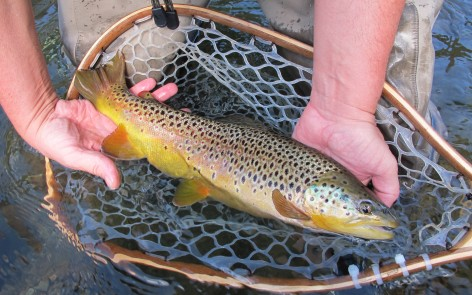 black hills brown trout fly fishing