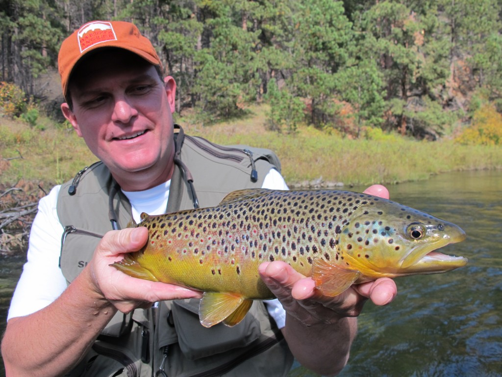 brown trout fishing black hills