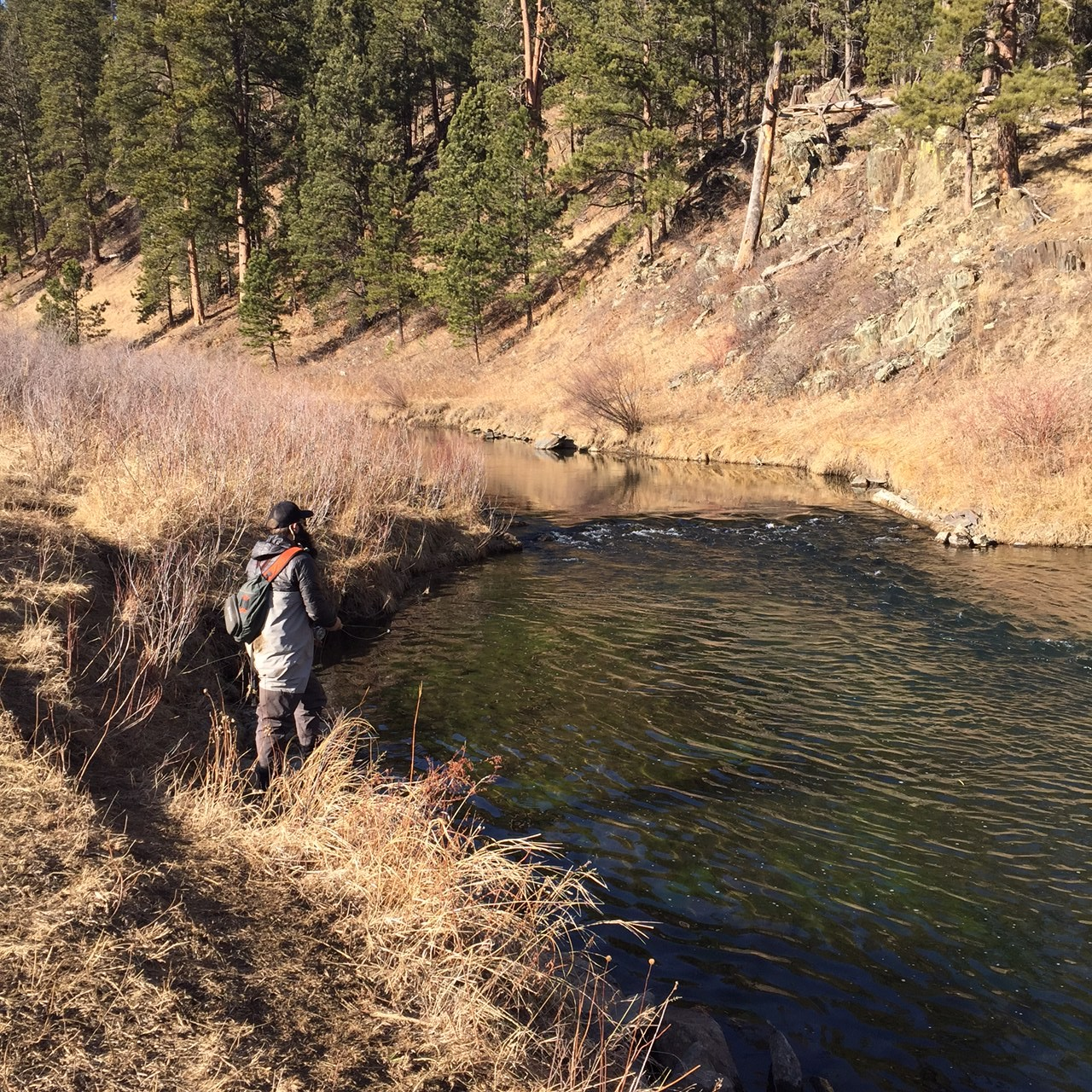 Rapid creek fishing february 12th 2015 dakota angler for Fly fishing south dakota
