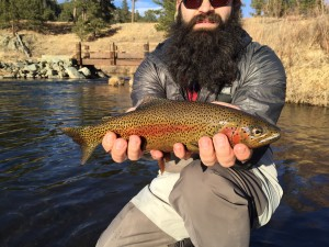 Rapid Creek Rainbow Trout