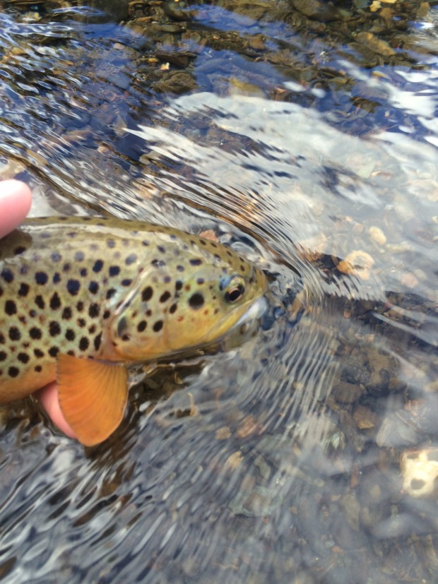 Rapid Creek Black Hills Winter Fly Fishing Brown Trout