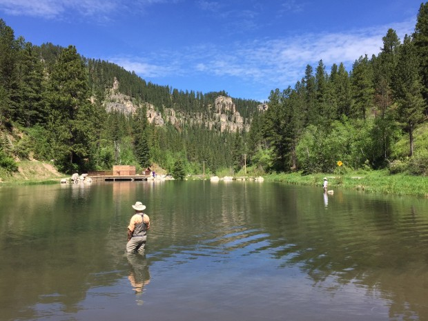black hills fishing report june 2015 trout