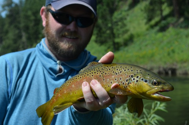 Average Rapid Creek Brown