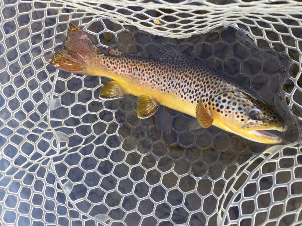Rapid Creek Winter Brown!