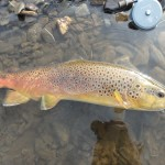 Click reel and a nice brown