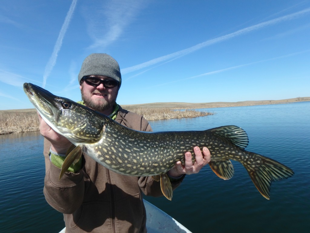 Shaun with a nice pike that ate  a couple feet from the boat!