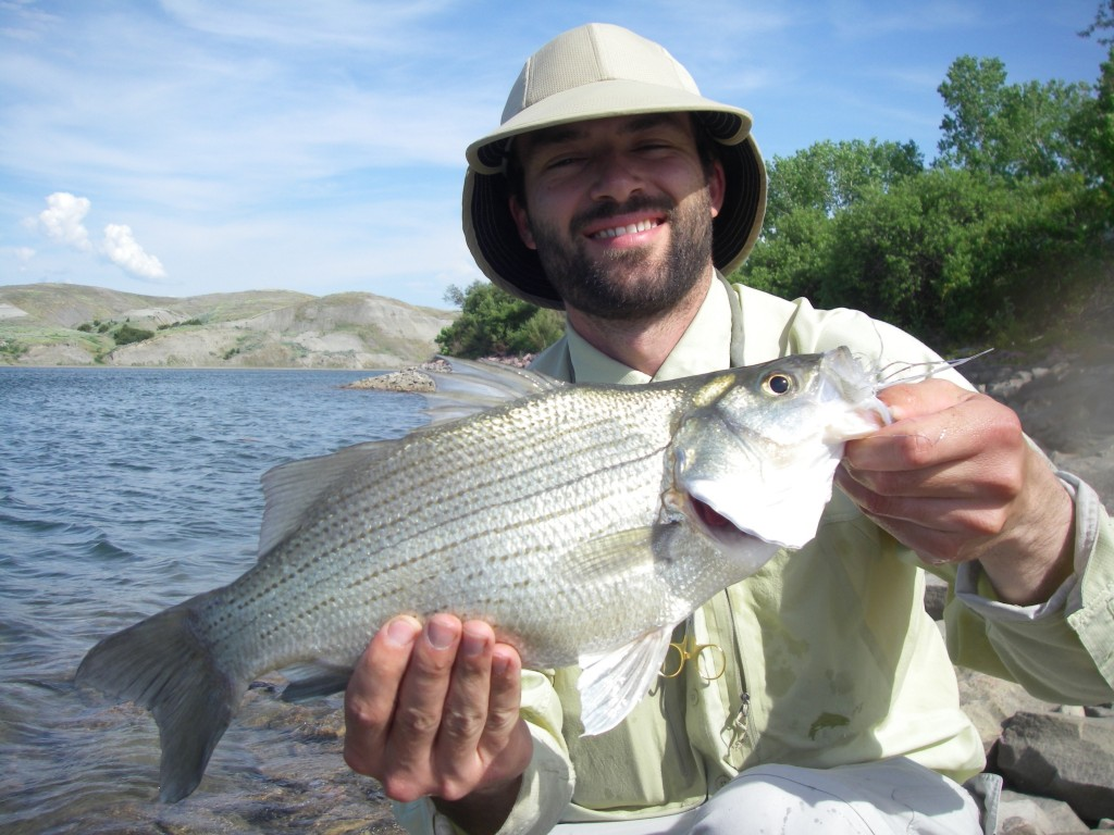 This White Bass was so bright Hans couldn't even keep his eyes open.