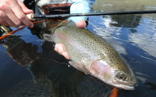 Sage X Rod Fly Fishing