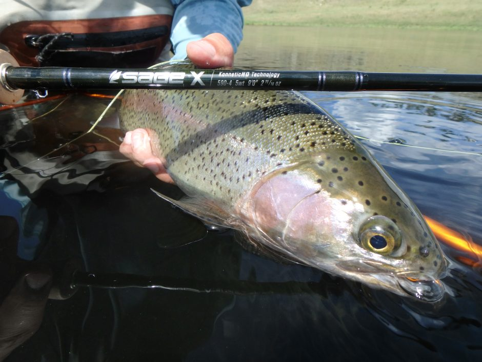 Sage X Fly Rod Rainbow Trout Fly Fishing