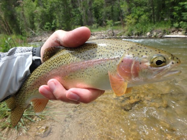 Black Hills Fishing Report Trout Fishing