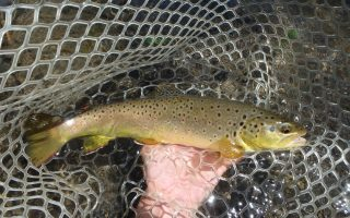 Black Hills Fishing Report July 20 2017